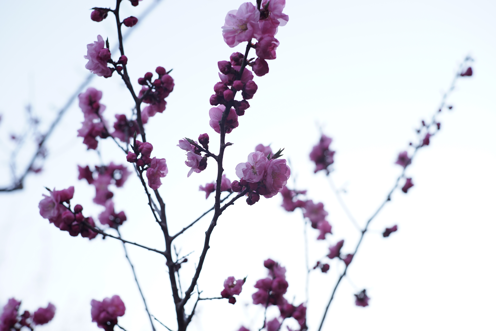 4月25日 円山公園